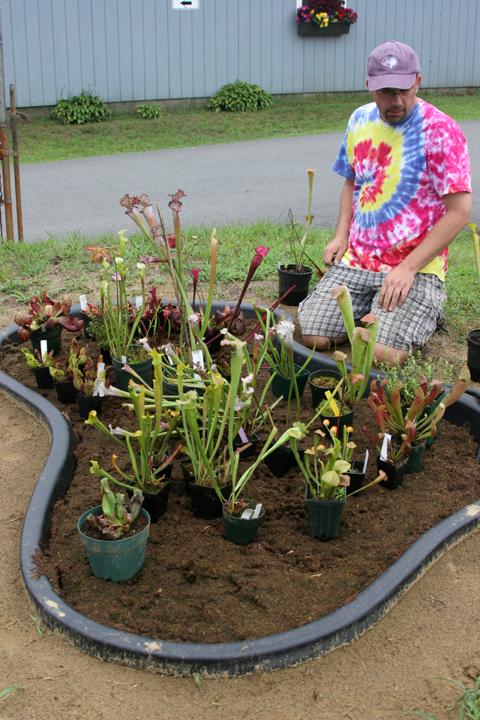 how to grow cps in an outdoor bog garden - Bog Garden