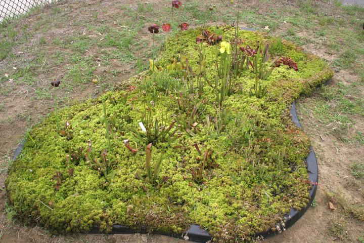 june 2007 - Bog Garden