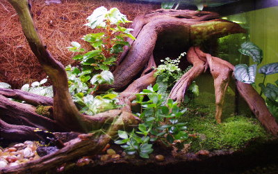 Image result for terrarium wood