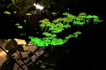 Bioluminescent Glow in the Dark Mushroom Habitat Kit