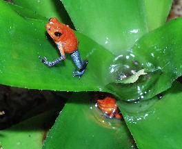 Introduction To Poison Dart Frogs