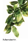 Exo-Terra Hanging Jungle Plant Mandarin - Large