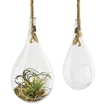 Glass Terrarium Med Teardrop Terrarium with Rope Hanger