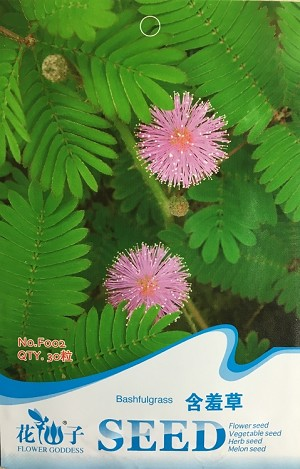 Mimosa pudica - Sensitive Plant (Package of Seed)