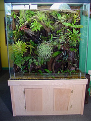 Dripwall Showcase Terrarium