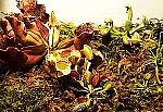 Carnivorous Plants Assortment - 4