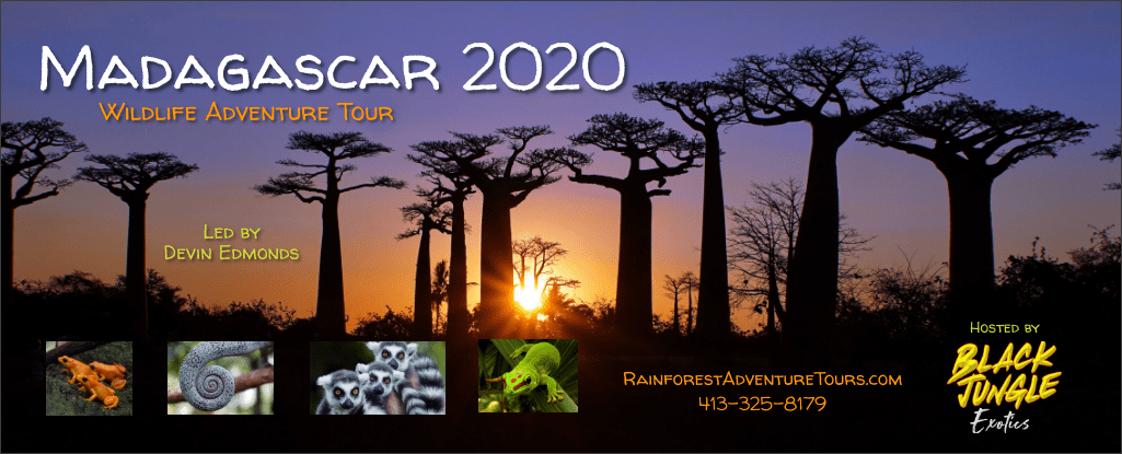 Madagascar Wildlife Adventure Tour - 2020!