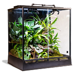 Amazonia Vivarium (by In Situ Ecosystems)